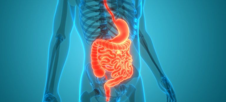 DigestiveEnzymes and Probiotics: What's the Difference?