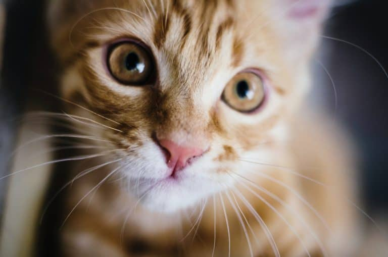 What are the Best Probiotics for Cats? 3 Purrfect Picks