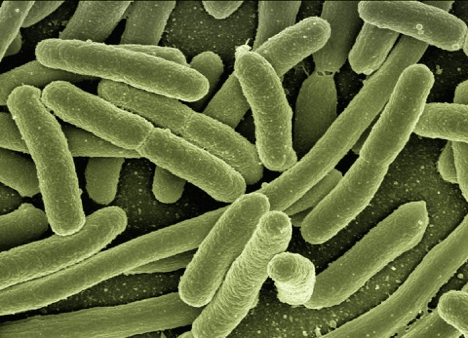 immune system in the gut